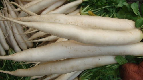 Is It Safe To Eat Radish During Pregnancy?